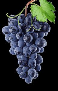 karusa wines